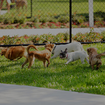 Large Dog Park at Volare Apartments